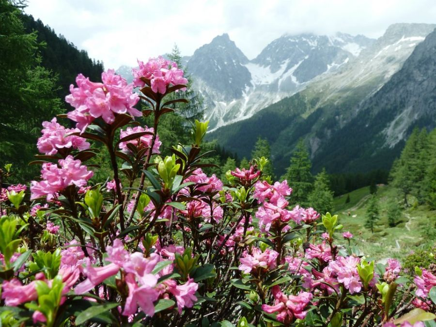 Antholz-Blumen